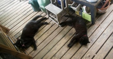 Mimi and Mewsette and the Deck and the Flowers and the Heat