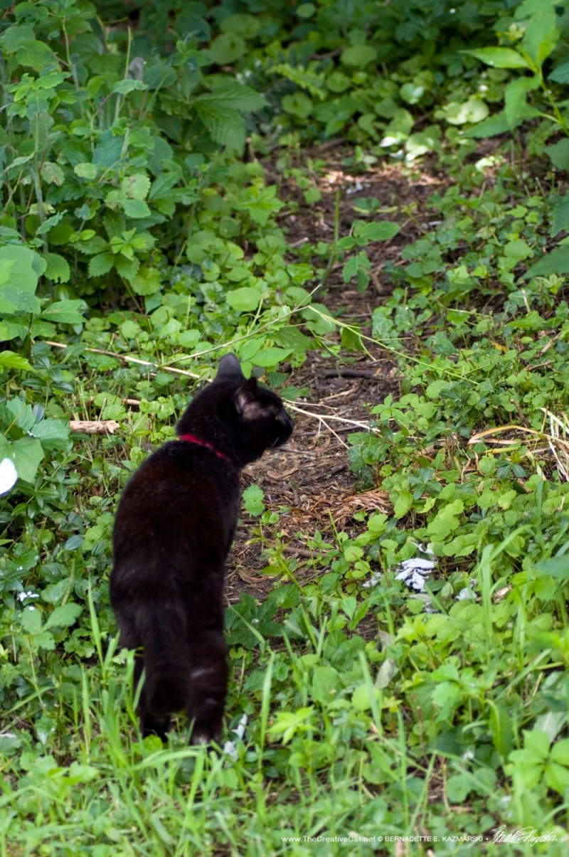 black cat on path