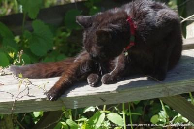 black cat on picnic bench