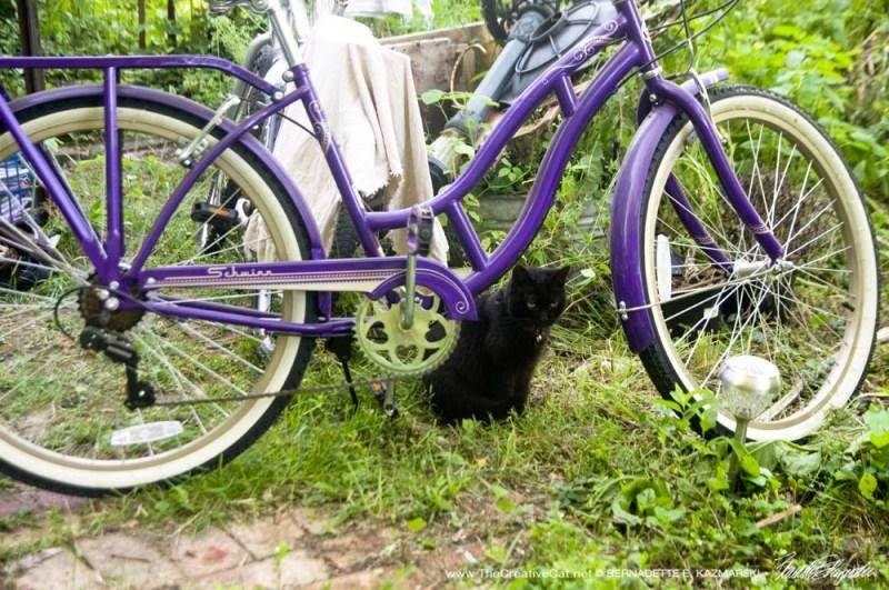 black cat and bike