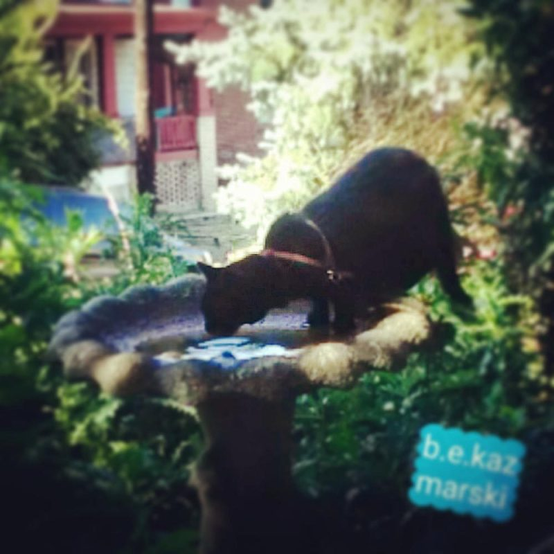 Mimi on the bird bath.