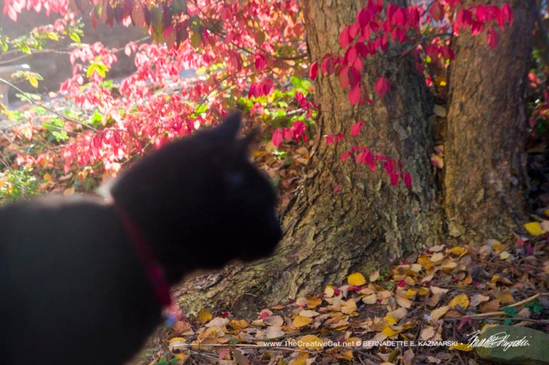 black cat and red leaves