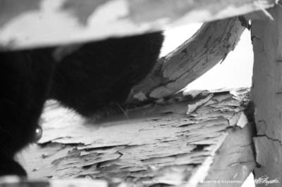 black and white photo of black cat