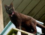 black cat on railing