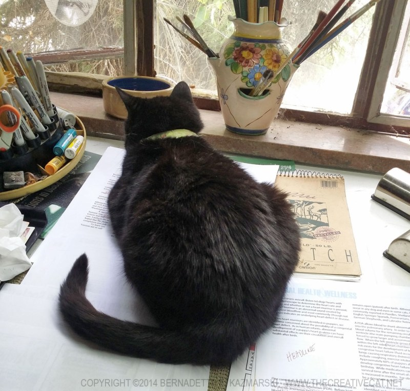 black cat on desk with window