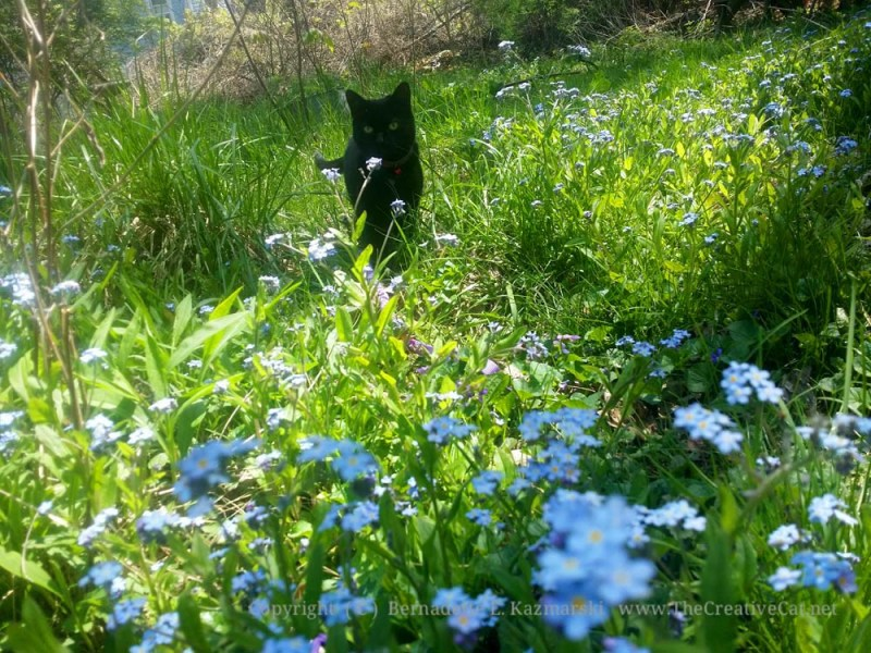 Mimi in-forget-me-nots.