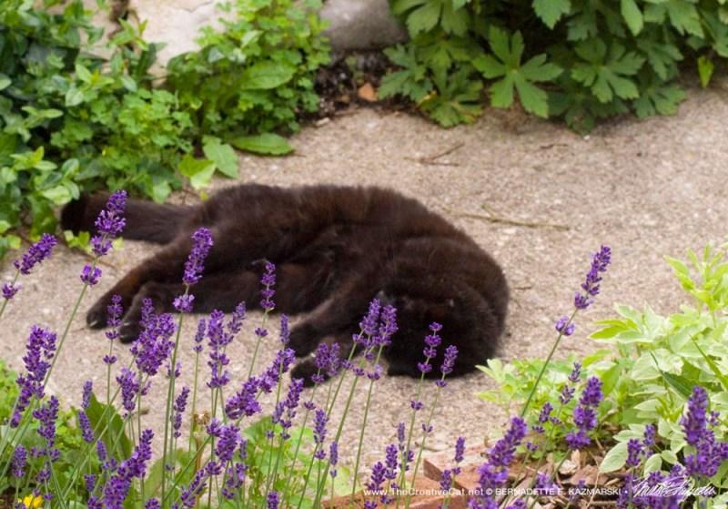 Mimi in Lavender