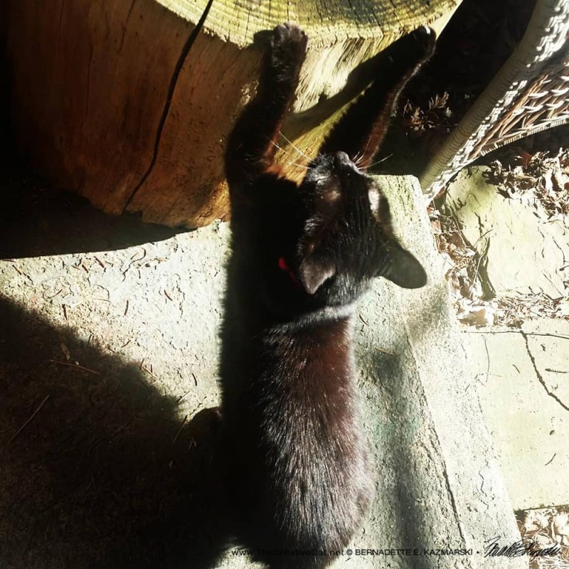 Mimi scratches her cherry log outside.