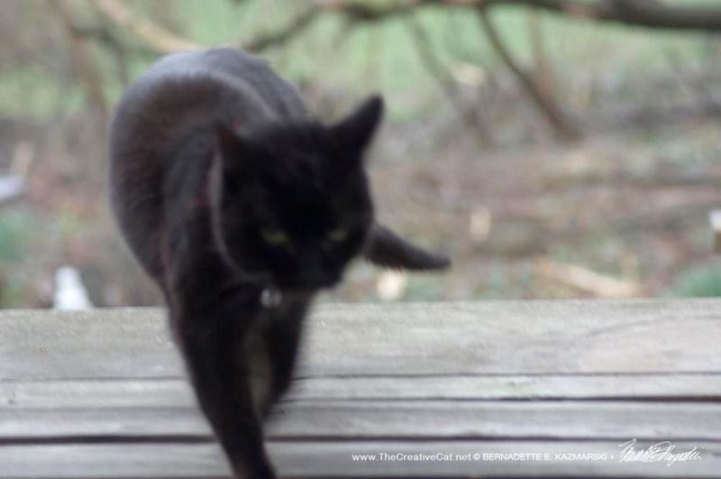 black cat watching the rain