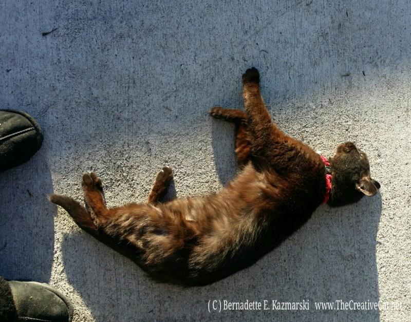 Mimi on warm concrete.
