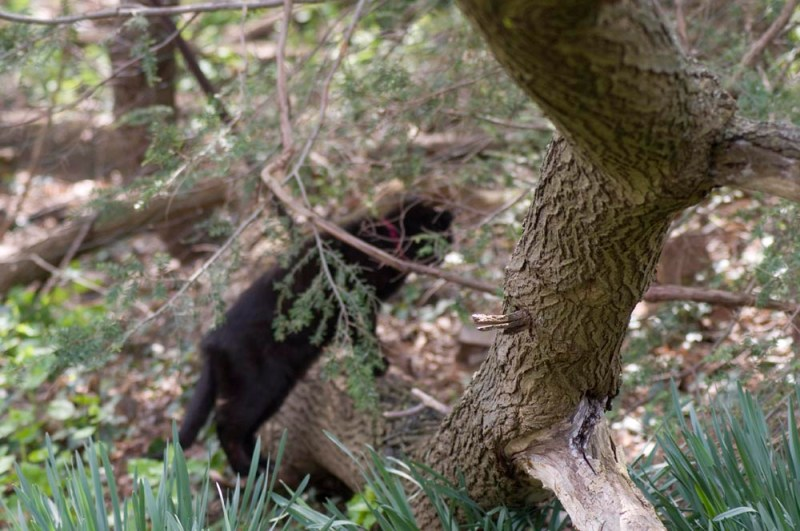 black cat on tree