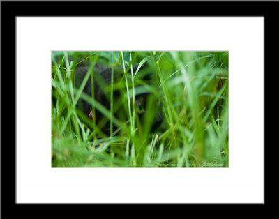 The Huntress: Intent, framed.