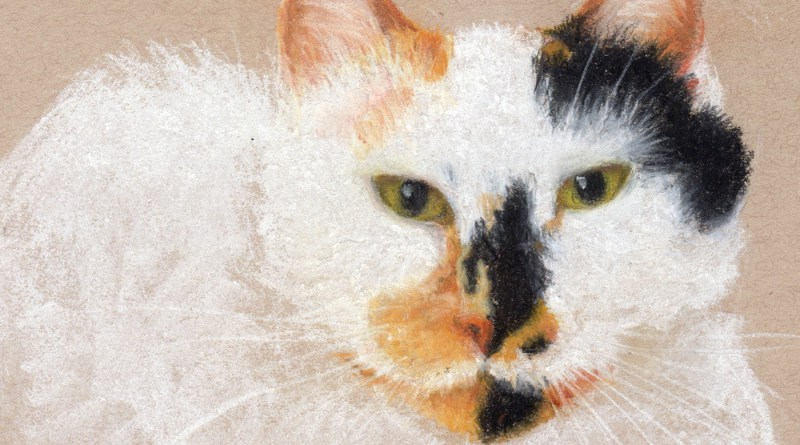 """Mollie"", white and black charcoal, pastel pencil, 5"" x 7"" © Bernadette E. Kazmarski"