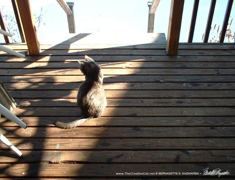 gray cat on deck
