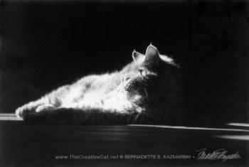 gray cat in sun