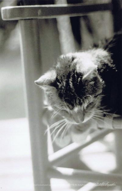 tabby cat on rocker