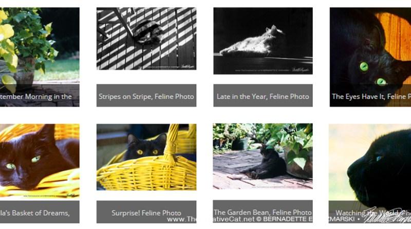 A selection of new feline photos.