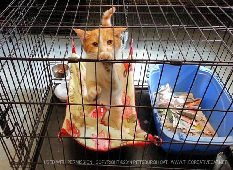 orange cat in cage