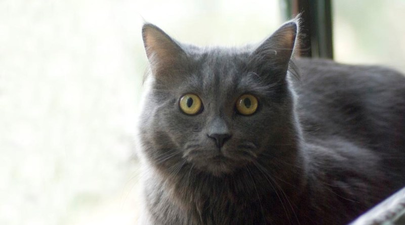 gray cat on windowsill