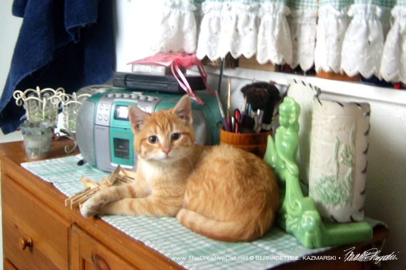 A little orange kitten!
