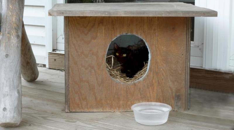 Sturdy straw-filled shelter in use by one of the ferals.