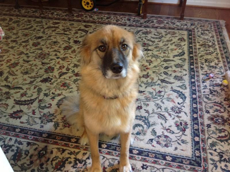 photo of dog on rug.