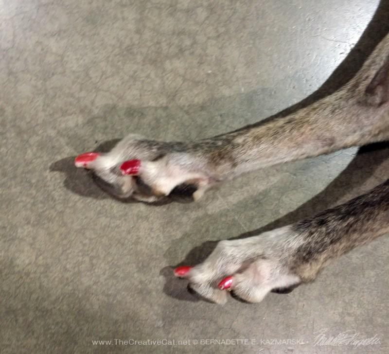 painted toenails on dog