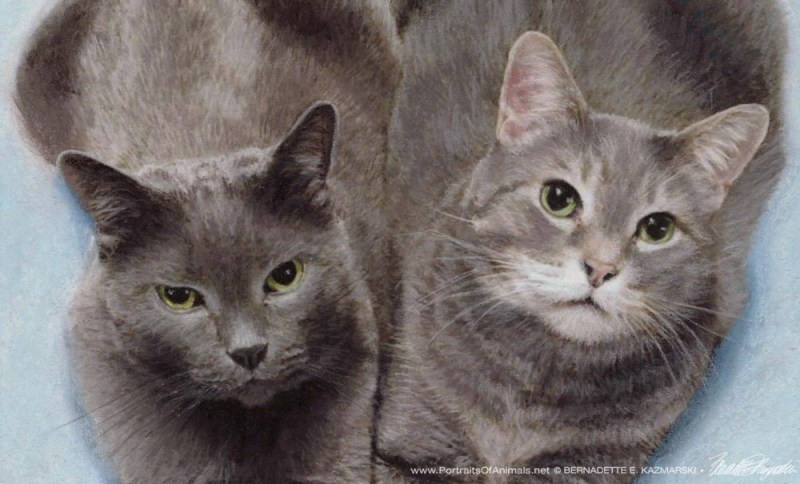 detail of pastel portrait of two gray cats