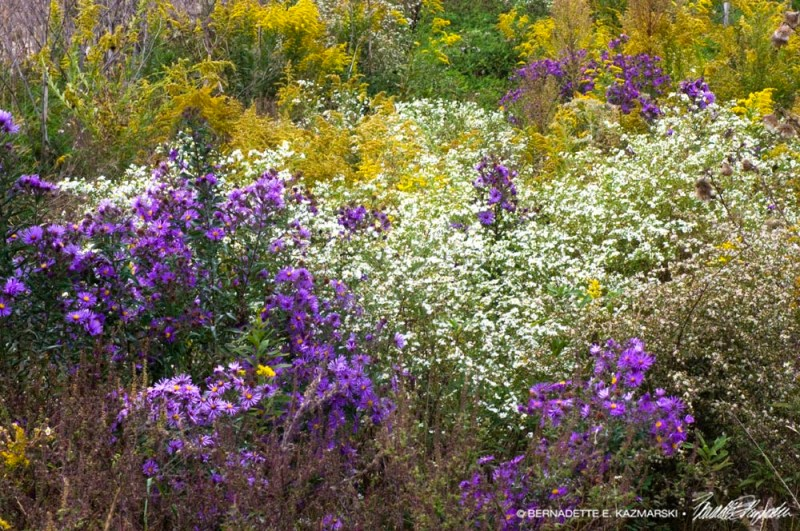 autumn wildflowers