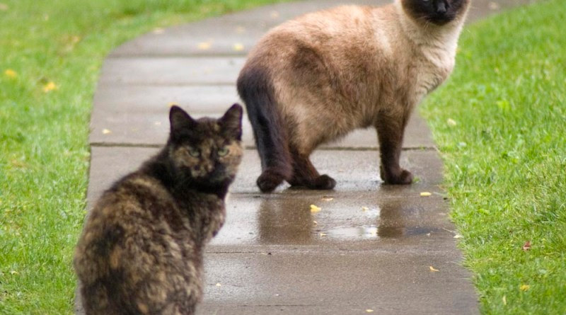 two eartipped cats