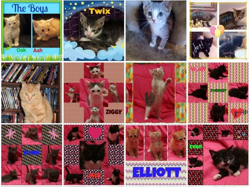 Cats and kittens available for adoption through Pittsburgh CAT.