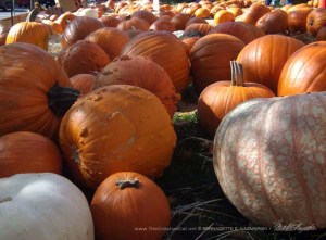 Medium-sized pumpkins