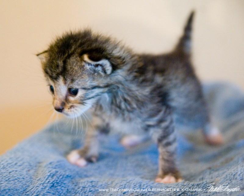 Raphael the kitten