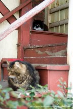 Feral cats on the steps.