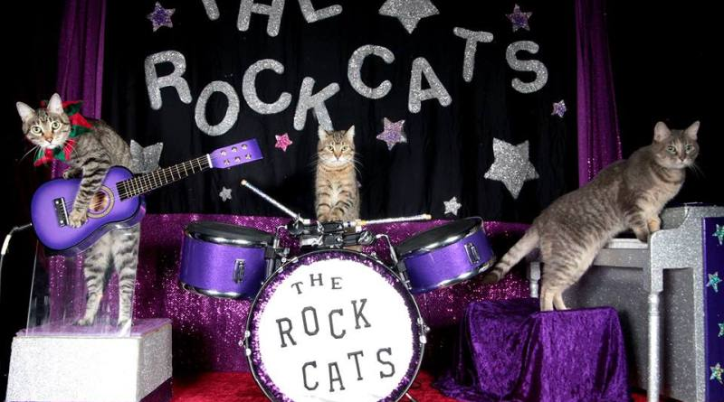 The Rock-Cats