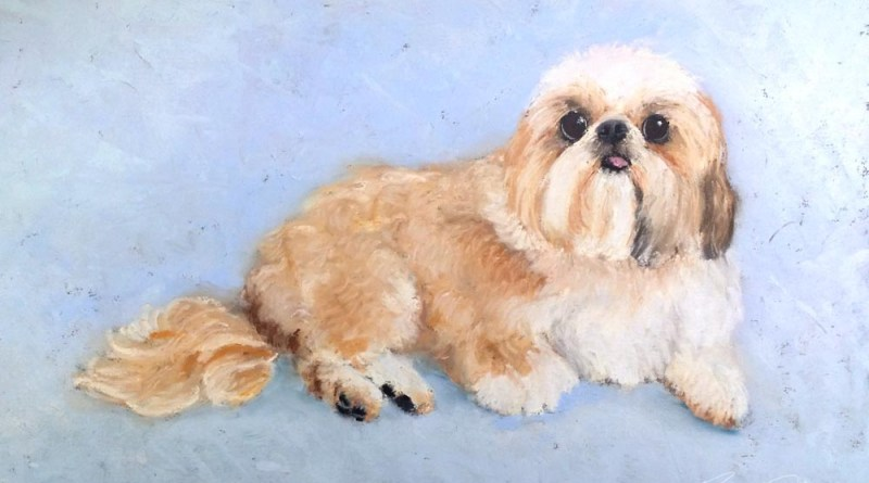 pastel portrait of shi tzu