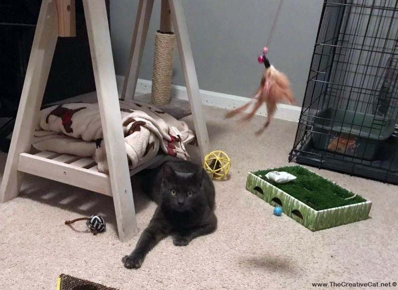 Smokey and the feather toy.