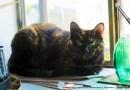 tortoiseshell cat on the windowsill