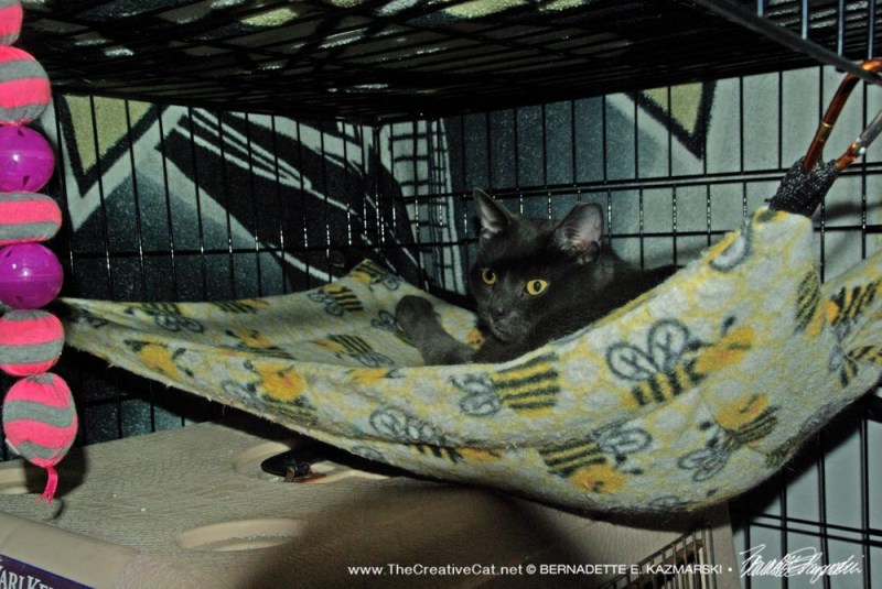 Smokey in his hammock when I opened the door and gave him a treat.