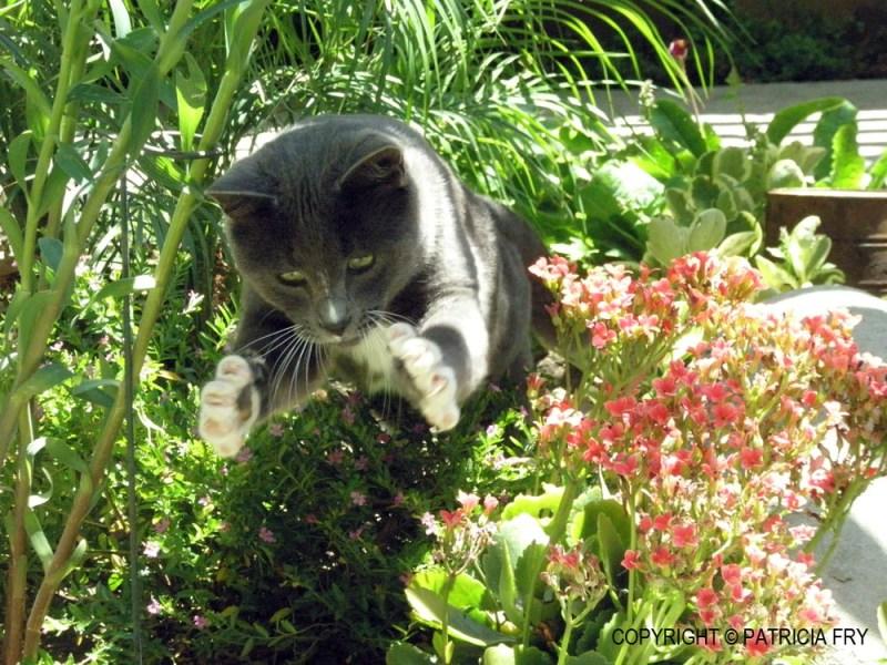 Patricia's photo of Smokey.