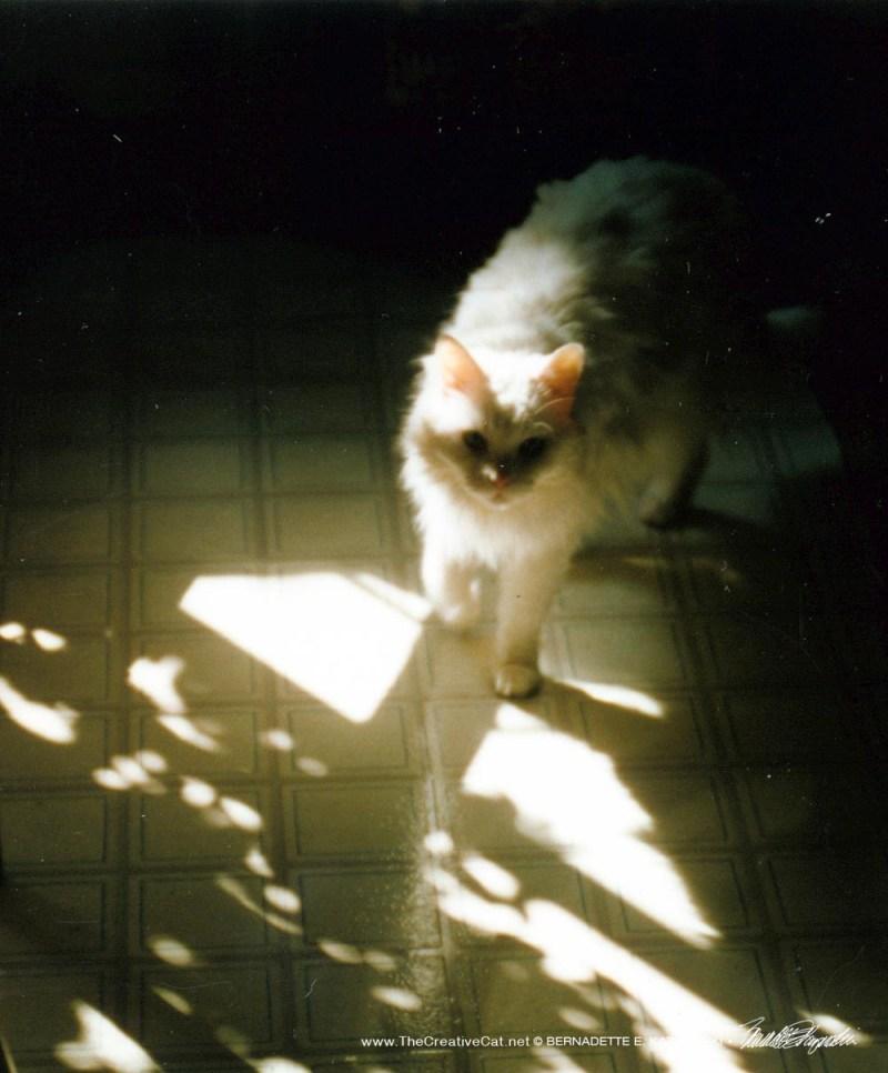 Speckle Sally Walking