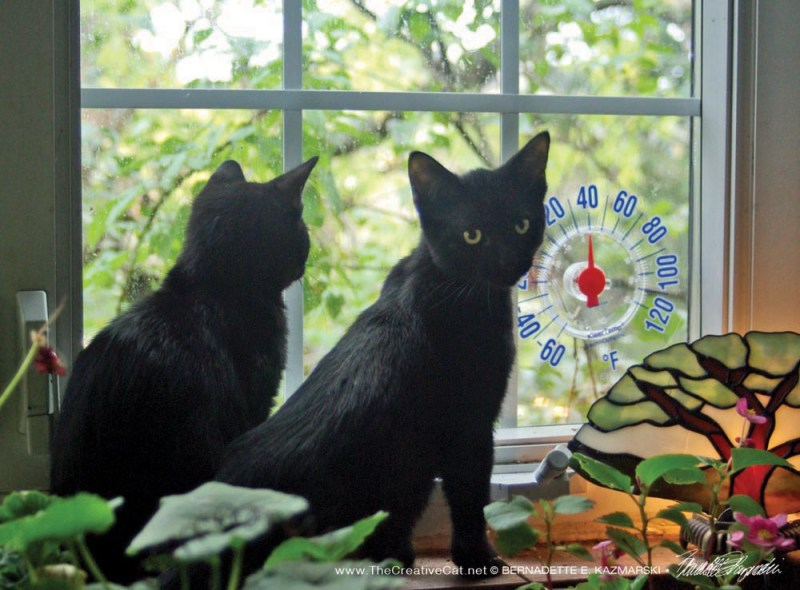 Jelly Bean and Giuseppe at the window.