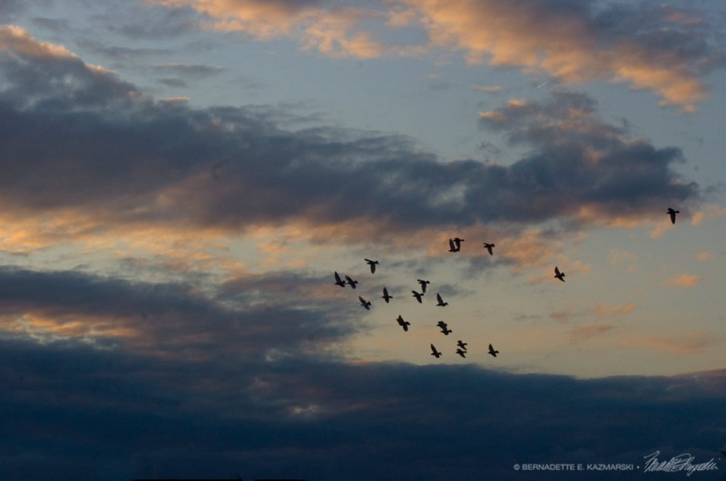 doves at sunset