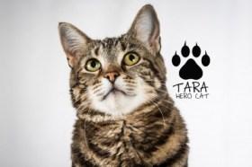 Tara the Hero Cat, courtesy Organikat's LA Feline Film Festival.