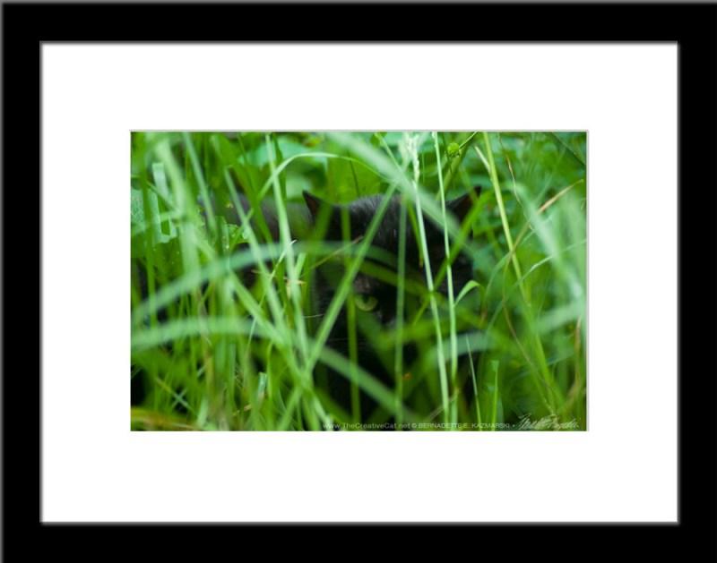 The Huntress: Waiting, framed photo.