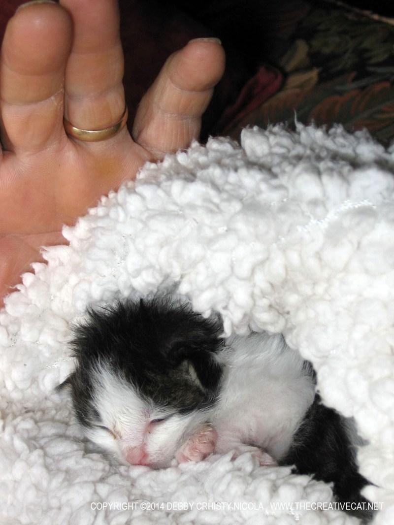 tux kitten in fleece