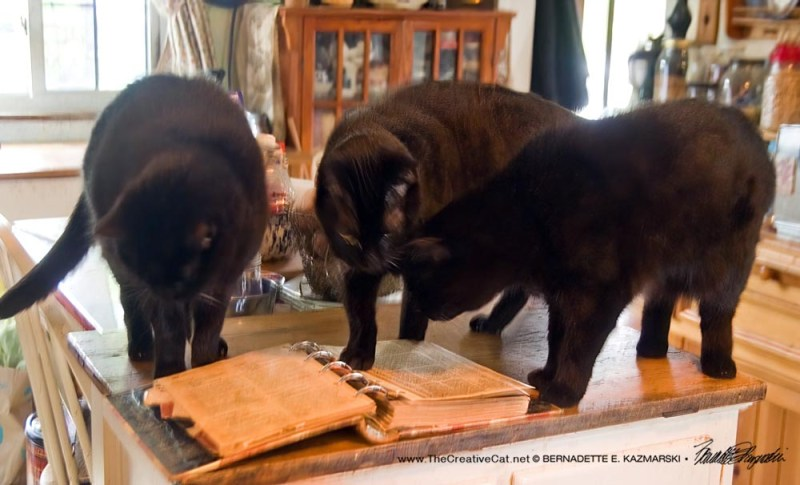 three black cats with cookbook