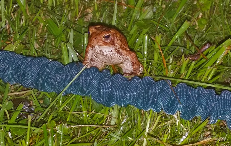 A little toad.