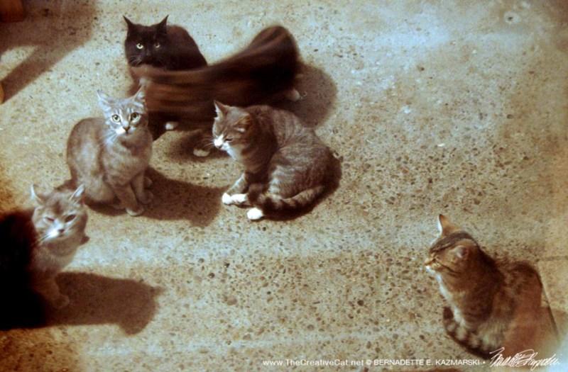 six cats waiting
