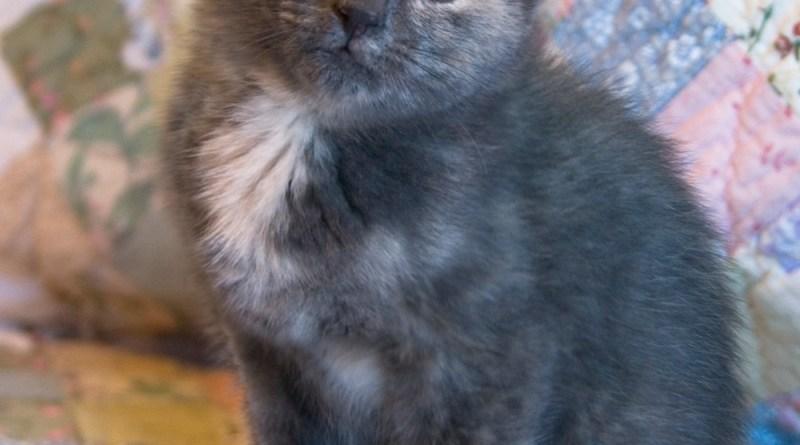 Meet Violet!